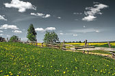 Old fence on field along road — Stock Photo