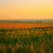 Stock Photo: Summer countryside landscape in the evening.