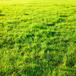 Fresh spring green grass. — Stock Photo