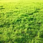 Fresh spring green grass. — Stock Photo #8212817