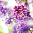 Spring flowers — Stock Photo #8212955