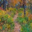 Autumn forest path - Stock Photo