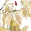 Autumn leaves, shallow focus, high key — Stock Photo