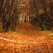 Stock Photo: Mn forest scene, road in forest