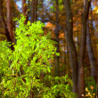 Ast green leaves, autumn forest, shallow dof — Stock Photo