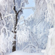 Winter trees covered with fresh snow — Stock Photo