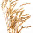 Wheat isolated - Stock Photo