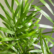 Plant closeup - Stock Photo