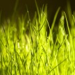 Green grass close up background — Stock Photo #8214880