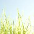 Green grass close up background — Stock Photo #8214884