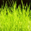Green grass close up background — Stock Photo