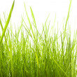 Green grass — Stock Photo #8215069