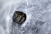 Hole in sreepy spider web — Stock Photo