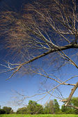 Tree and blue sky scene — Stock Photo