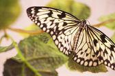 : fjäril — Stockfoto