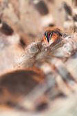 Spider close-up — Stock Photo