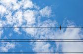 Vogel op een draad. — Stockfoto