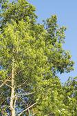 Tree and blue sky scene — Stock Photo