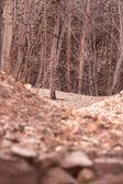 与干树诡异森林 — 图库照片