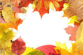 Autumn leaves — Foto Stock