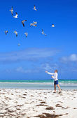 Man on the beach feeding sea gulls. — Stock Photo