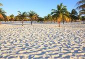 White sand and palm trees. Playa Sirena. Cayo Largo. Cuba. — Stock Photo