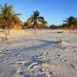 White sand and palm trees. Playa Sirena. Cayo Largo. Cuba. - Stock Photo