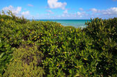 Shore was covered with vegetation. Cayo Guillermo. Cuba. — Foto de Stock