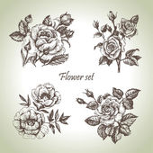 Floral set. Hand drawn illustrations of roses — Vector de stock