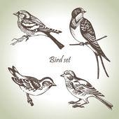 птица набор — Cтоковый вектор