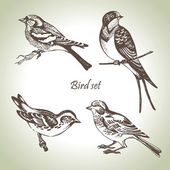 Bird set — Vector de stock