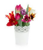 Multi colored tulips in flowerpot — Stock Photo