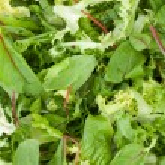Healthy green salad closeup — Stock Photo