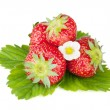 Four strawberry fruits with green leaves and flowers — Stock Photo