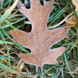Frosty fallen leaf — Stock Photo