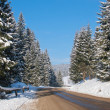 Stock Photo: Heavy snow on road