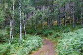 Path trough the beautiful summer forest — Stock Photo