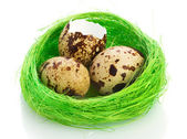 Nest with quail eggs over white background — Stock Photo