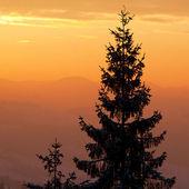 Güzel gündoğumu karpat dağları, ukrayna — Stok fotoğraf