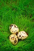 Easter quail eggs in the grass — Stock Photo