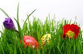 Rojo huevos de pascua en hierba verde con fondo blanco — Foto de Stock