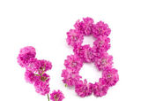 The number eight from flowers — Stock Photo
