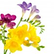 Yellow and violet fresion white — Stock Photo #8901862
