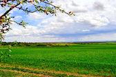 Rural landscape — Stok fotoğraf