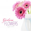 Gerbera flowers — Stock Photo #8587988