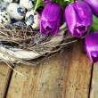 Easter eggs with purple tulip flowers — Stock Photo