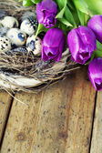 Easter eggs with purple tulip flowers — Stok fotoğraf