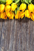 Yellow tulips — Stockfoto