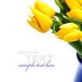 Gele tulpen — Stockfoto