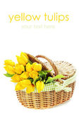 Yellow tulips in a basket — Stock Photo